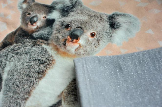 koala zoom